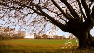 Arcelia - Long Man (official video)