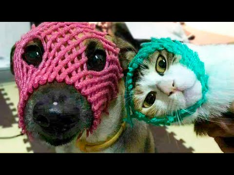 🤣 Funniest 😻Cats And 🐶 Dogs From Tik Tok - Try Not To Laugh - Funny Pet Animals 😇