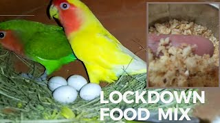 cheap and high protein food mix that you can give to your breeding birds and chicks in this time
