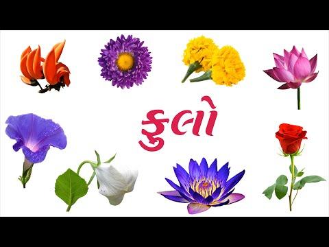 ફૂલના નામ ગુજરાતી | Flowers name in Gujarati | Kids Videos | Nursery Rhymes | Flowers | ગુજરાતી ફૂલ