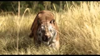 Фильм «Книга джунглей» Трейлер 2015