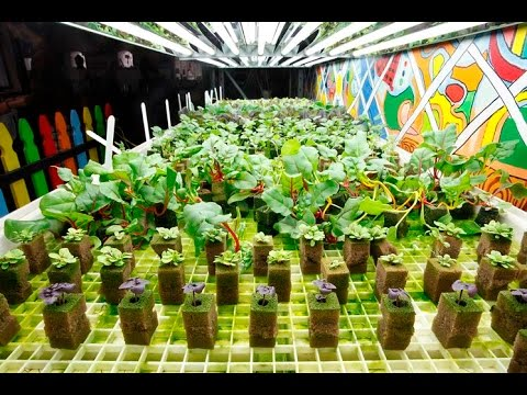 Type Vegetables to Grow Indoors YouTube