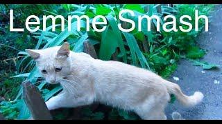 Lemme Smash - Cat Edition