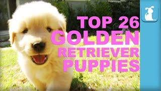 26 Reasons Golden Retriever Puppies Are The Best In 60 Seconds - Puppy Love