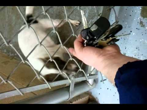 Cleveland County-North Carolina-Sweet Baby Needing Home/Rescue