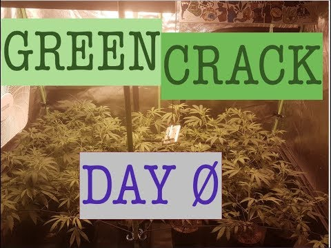 Sea of GREEN CRACK Day 0