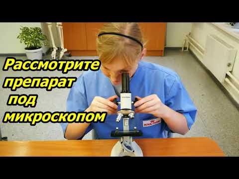 4 3  Видеоролик  ПЗ №3  Лабораторная работа Строение растительной клетки  Козырева А Ю