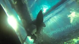 HaiTauchen Aquarium Kapstadt