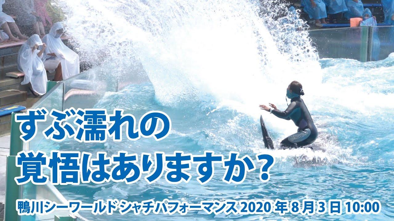 ずぶ濡れの覚悟はありますか? Are you ready to get drenched?【2020年8月3日10:00 鴨川シーワールド シャチパフォーマンス】Killer whale pe