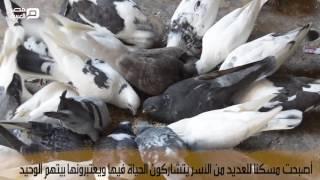 مصر العربية | تكية السليمانية.. تاريخ ضاع لحل أزمة سكن