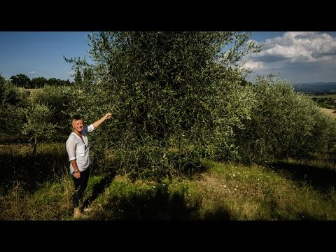 ORGANIC FOOD ITALY, ORGANIC OLIVE OIL. REAL PEOPLE GROWING REAL FOOD AT SUZIE'S YARD IN TUSCANY.
