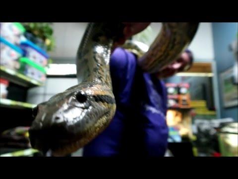 My anaconda don't want none......