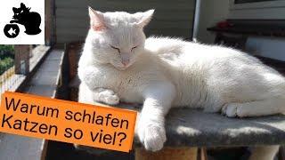 🔥Warum schlafen Katzen so viel? Wie lange schlafen Kitten? Wieviel Schlaf ist normal?
