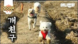 Dog Trio สอนให้คุณรู้ว่ามิตรภาพที่ถูกกฎหมายคืออะไร ('3 Idiots' Dog Ver.)