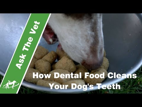 How Dental Food Cleans Your Dog's Teeth- Companion Animal Vets