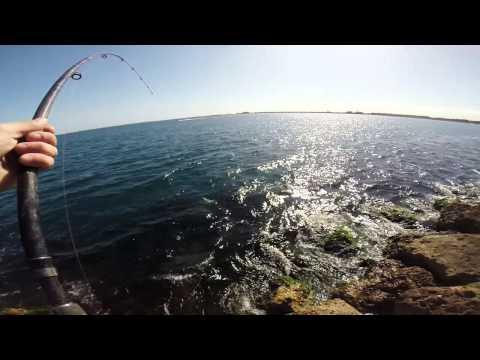 Rock Fishing,77cm Pink Snapper.caught Landbased.Perth,WA Australia