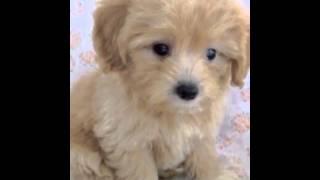 おススメのメルマガ→【さおりん英語】http://mail.os7.biz/m/pydO 子犬...