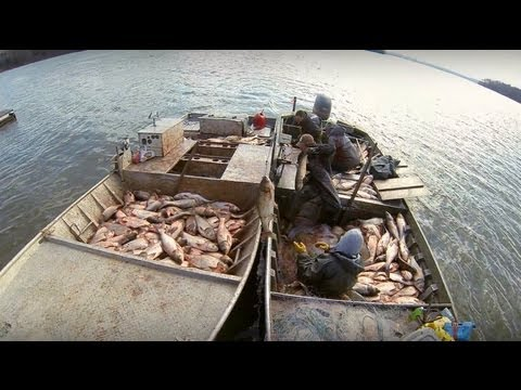 Carp Madness - Commercial Fishing Tournament