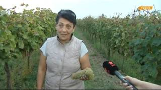 Виноделие Грузии  как производят и где хранят напиток