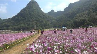 Tin Tức 24h Mới Nhất:  Thung lũng hoa Bắc Sơn thu hút khách du lịch