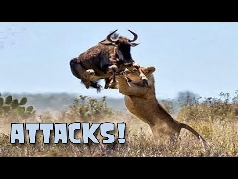 Animal Attacks Most Deadly Animals;  World&39;s Greatest Animals Commercial