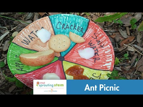 Virtual Sprouting STEM: Ant Picnic