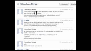 Inbox Con Chihuahuas Merida Las Fraudulentes Y De Paso Ofensivas Veanlo.