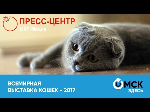 Всемирная выставка кошек - 2017
