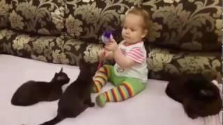 Поиграем втроем? Бурманские котята.