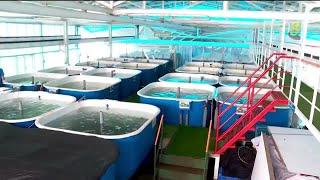 巴西立浮动鱼场 明年5月起投入运作 - YouTube