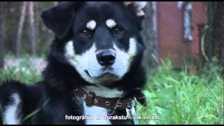 Video, Как найти пропавших животных