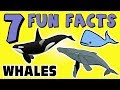 7 FUN FACTS ABOUT WHALES! WHALE FACTS FOR KIDS! Ocean! Fish! Sea! Learning Colors! Funny Sock Puppet