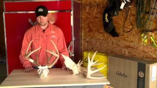 How To Score Deer Antlers