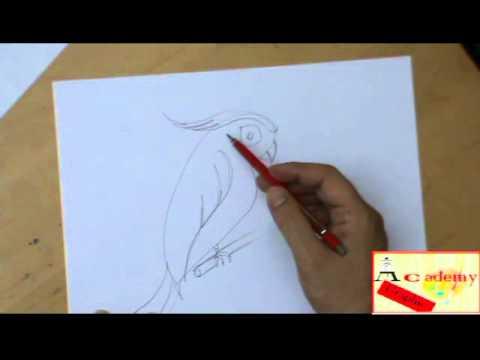 Come Si Disegna Un Pappagallo