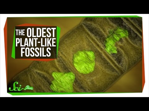 The Oldest Plant-Like Fossils Ever