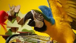 Попугай ара и сердечко