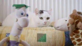 Мультик про кошку. Кошка Муха