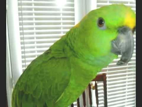 Best talking bird ever!!!