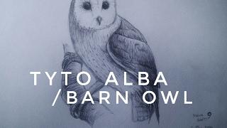 Tyto Alba Owl | Ballpoint Drawing Time Lapse