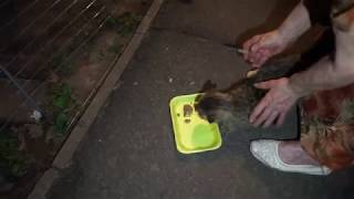 Заключительный укол кошке Мурке! Работаем в темноте!