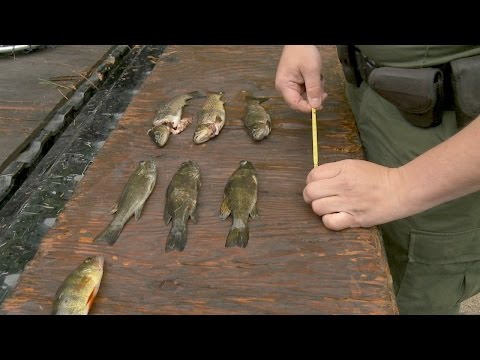 Man Found Over The Limit For Bass, Trout