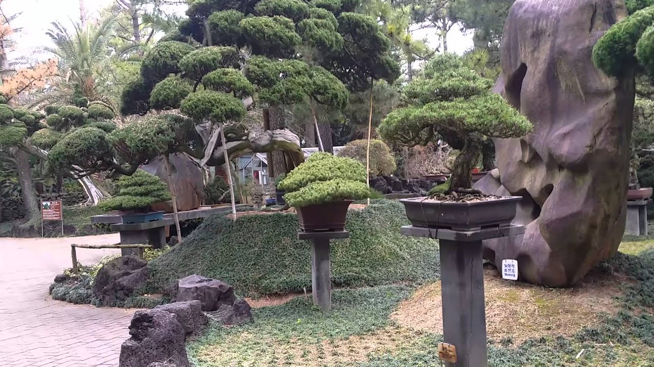 south korean oldest bonsai collection - Korean Garden