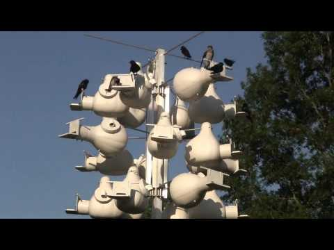 Purple Martin Bird House Perches For Troyer Gourds