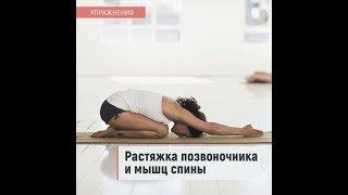 Упражнения - растяжка позвоночника и мышц спины
