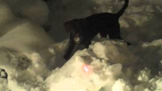 Dog Chasing a Laser Pen in the Snow