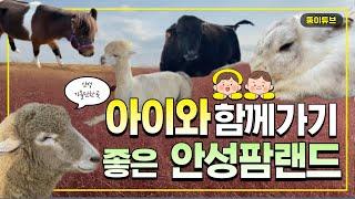 경기도 가볼만한곳 '안성팜랜드' 핑크뮬리…