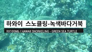 Hawaii Snorkeling - Green Sea …