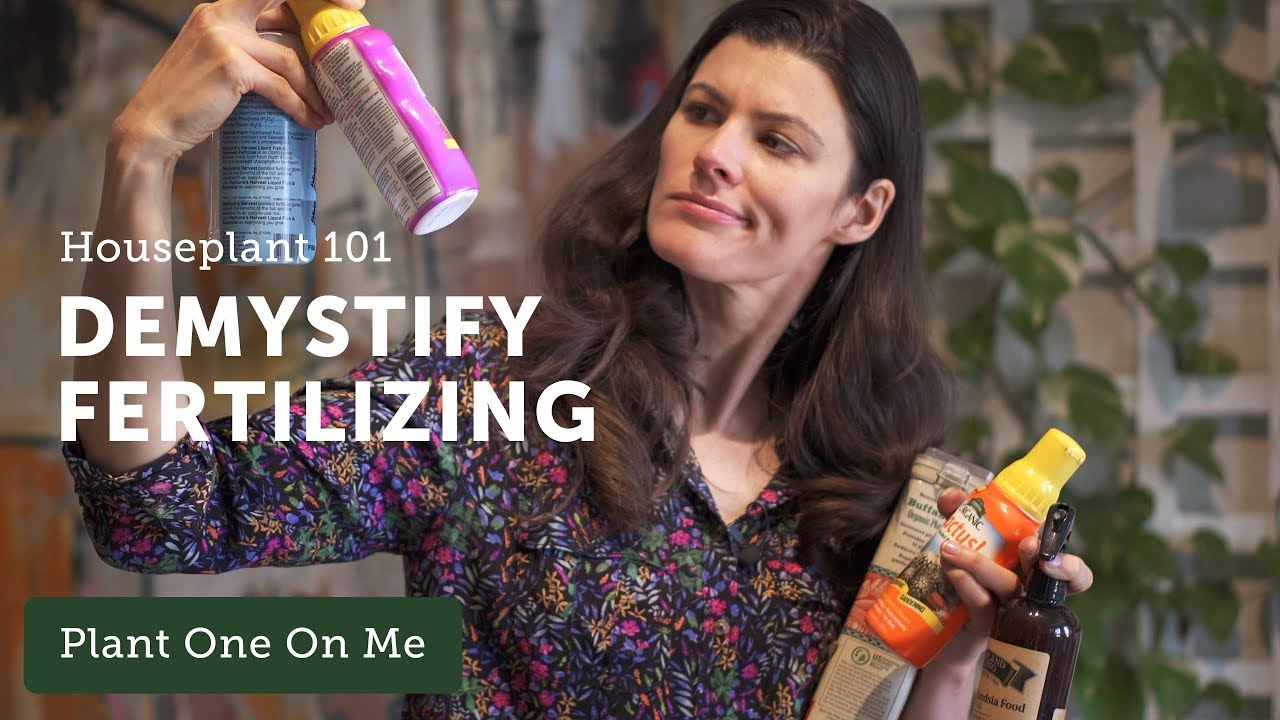 Fertilizing Houseplants 101 — HOMESTEAD BROOKLYN