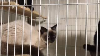 人が近づくとすぐ反応する猫たち Twitter→https://twitter.com/paradisenyank0.