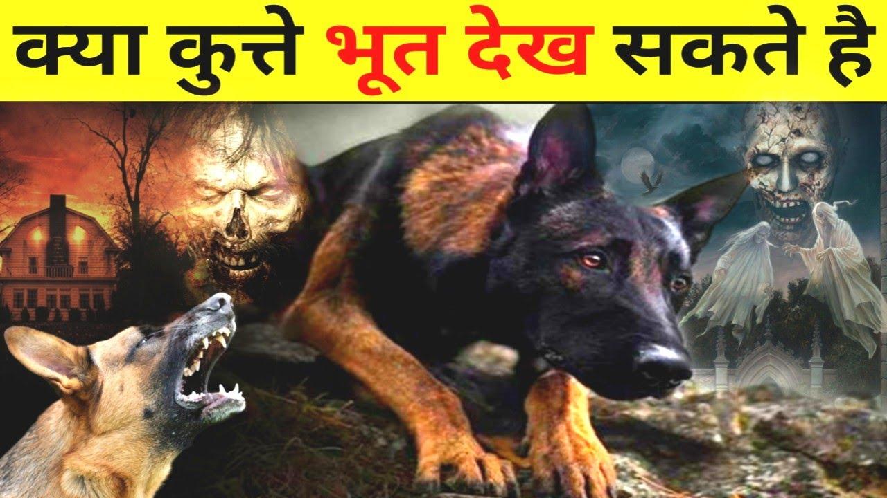 कुत्ते भूत देख सकते है या नही | Most Amazing Facts | Random Facts | Fact Guru Official